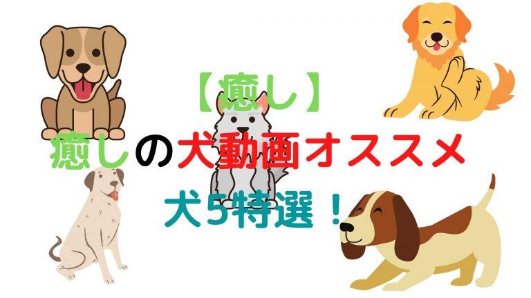 癒し犬のおすすめ5選